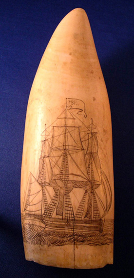 Scrimshaw Tooth With A Ship and A Gentleman